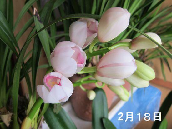 Photo_20200218142601