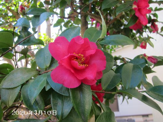 Photo_20200311142101