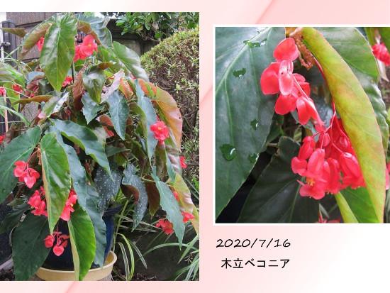 Photo_20200716145501