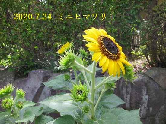 Photo_20200725134001