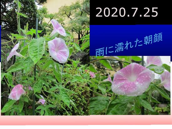 Photo_20200725134301