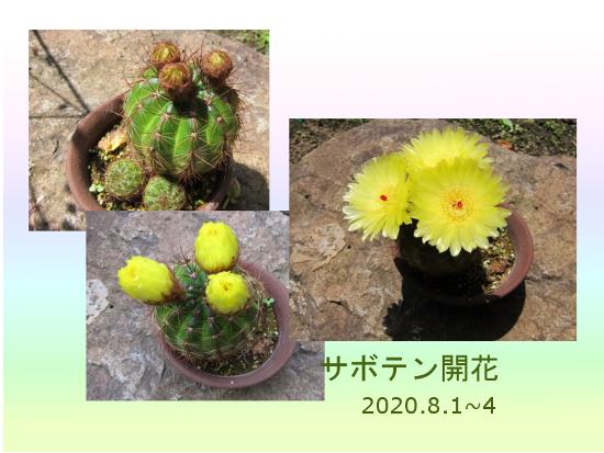 Photo_20200804142601