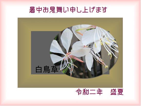 Photo_20200806142801