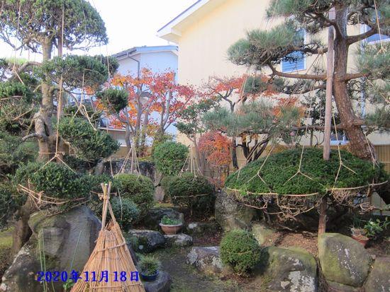 Photo_20201124160601